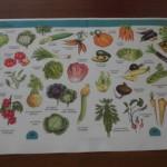 Pflanzen 115
