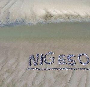 NIGE 50